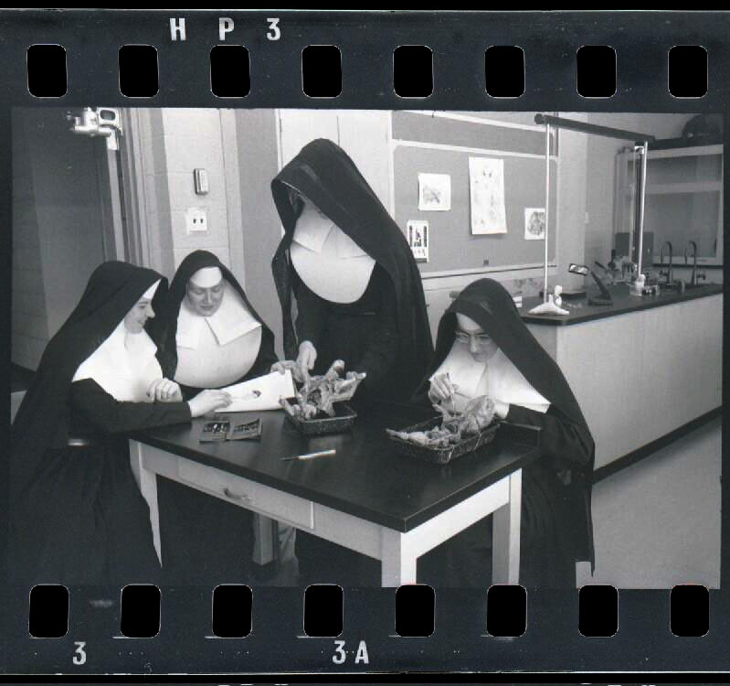 four nuns dissecting a small animal at a school in 1958